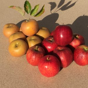 Apple Tree Special Offer (2019)