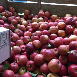 Apple Tree (2020)